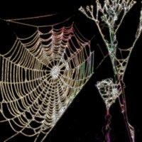 Поймал Вселенную паук... :: Лесо-Вед (Баранов)
