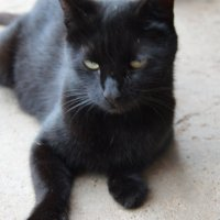 черный кот.. :: Арина Федорова