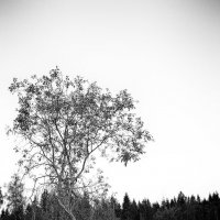 Женя у дерева :: Женя Рыжов