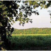 Скоро осень,за окнами август... :: Тамара (st.tamara)