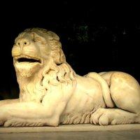 Улыбающийся лев :: Елена Даньшина