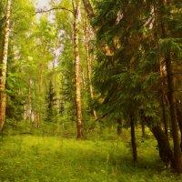 Сказочный лес :: Nika Dmitrieva