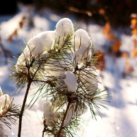 снег в лесу :: Павел Крутенко
