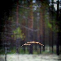 лес :: Мария