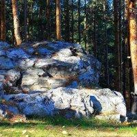 Там шумят леса,да дремучие... :: Галина Стрельченя