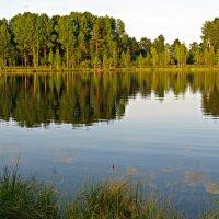 Лесное озеро....трудно к нему подойти... :: Наталья