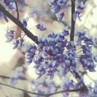Весенние цветы :: Виктория Велес