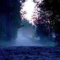 Туман :: Алексей Куликов