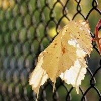 Осенний лист :: Алексей Истомин