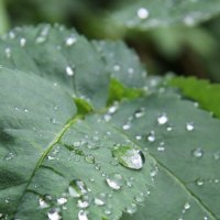 После дождя :: Андрей Чистоусов
