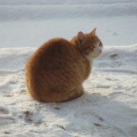 Кот на морозе :: Дмитрий Кольцов