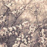 Цветы :: Виктория Велес