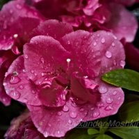 Цветок :: Alexander Moshkin