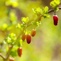 Весна :: Анастасия Ласская