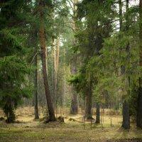 Волшебный лес :: Наталья Денисова