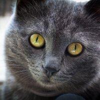 Просто кот :) :: Robert Sanasaryan