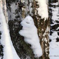 зима весну улыбкою встречает =) :: Евгений Молчанов