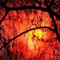 Солнце в ветках :: Сергей Жеребцов