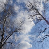 весна :: Ольга Янцен