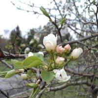 Весна :: Ксения Казакова