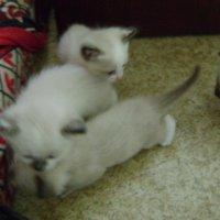 Котята :: Нурлан Даутбаев