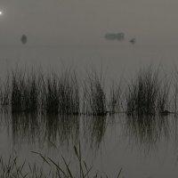 В лунной тиши :: Евгений Жиляев