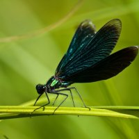 Dragonfly :: Сергей Куликов
