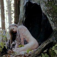 Лесные истории :: Сергей Ивашкевич
