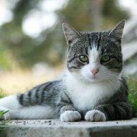 ::: Зарисовки о Карелии №1 Карельский кот ::: :: ПАВЕЛ КУЗНЕЦОВ