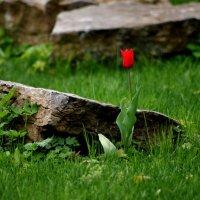 Аленький цветочек :: Сергей Гришунов