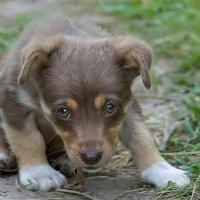 Я злой и страшный серый волк. :: Георгий Грушин (Photo-classic)