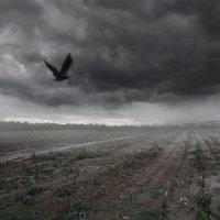 raven :: Артем Пахомов