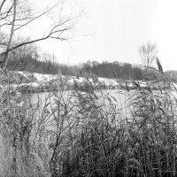 Первый снег :: Вячеслав Никитин