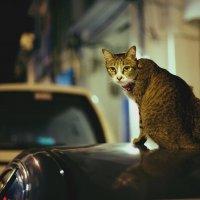 the кот :: Илья Михайлов