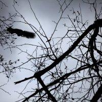 ::: Осенняя белочка 12 ФАНТОМ или ЕРШИК летающий ::: :: ПАВЕЛ КУЗНЕЦОВ