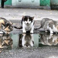 Кошачий водопой :: Эдуард Аверьянов
