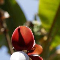 Пальма в цвету :: Eva Langue