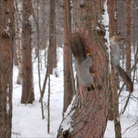 Догонялки в лесу... :: Андрей Воробьев