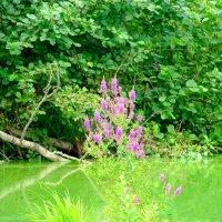 Красота цветущего озера :: Стил Франс