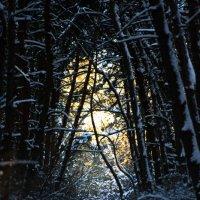 день в зимнем лесу;) :: Кирилл Киреев