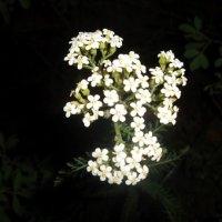 Цветок :: Vika Kleinos