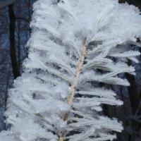 зима... :: валерий телепов