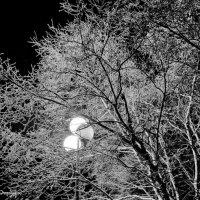 Одинокий фонарик :: Олег Цокур