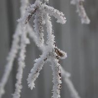 Зима :: Петелин Андрей
