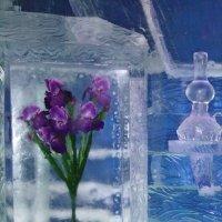 Ирисы во льду. :: Наталья Иванова