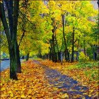золото осени :: Валерий Коноплев