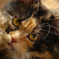 кошка  Вася :: Татьяна Рыбина
