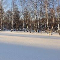 Зимний лес :: Николай Мальцев