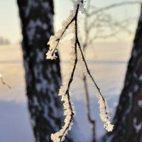 В зимнем наряде. :: Николай Мальцев