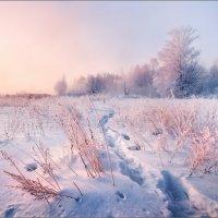 / Фрагмент морозного утра / :: Влад Соколовский